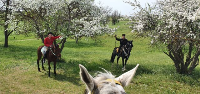 Казачий конный переход в честь Дня Великой Победы стартовал на Ставрополье